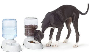 Pet Feeder and Watere